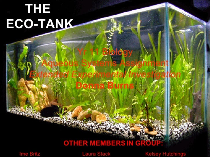 THE  ECO-TANK Yr 11 Biology Aqueous Systems Assignment Extended Experimental Investigation Donna Burns OTHER MEMBERS IN GR...