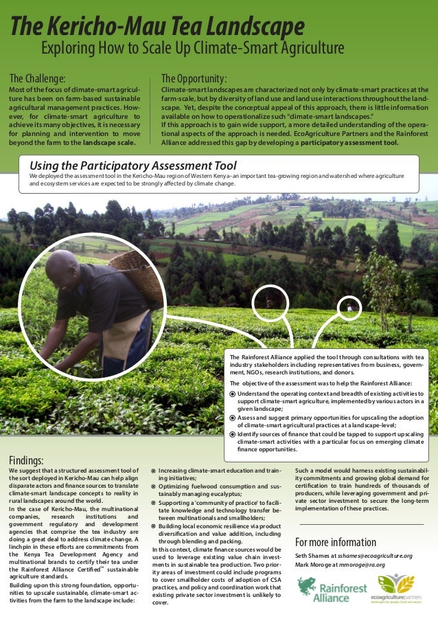 The Kericho-Mau Tea Landscape           Exploring How to Scale Up Climate-Smart AgricultureThe Challenge:                 ...