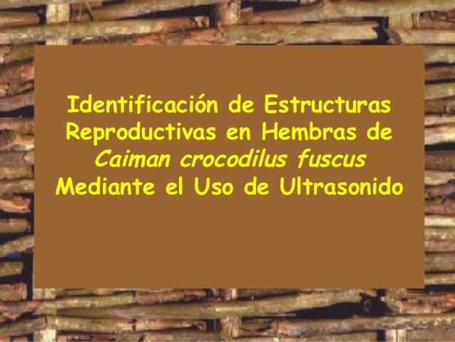Identificación de Estructuras Reproductivas en Hembras de Caiman crocodilus fuscus Mediante el Uso de Ultrasonido