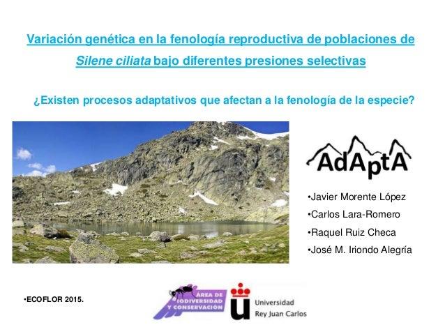 Variación genética en la fenología reproductiva de poblaciones de Silene ciliata bajo diferentes presiones selectivas •Jav...