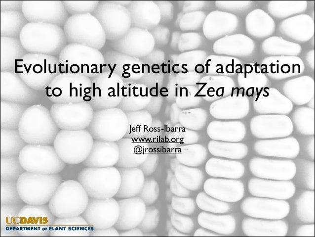 Evolutionary genetics of adaptation to high altitude in Zea mays  Jeff Ross-Ibarra  www.rilab.org  @jrossibarra