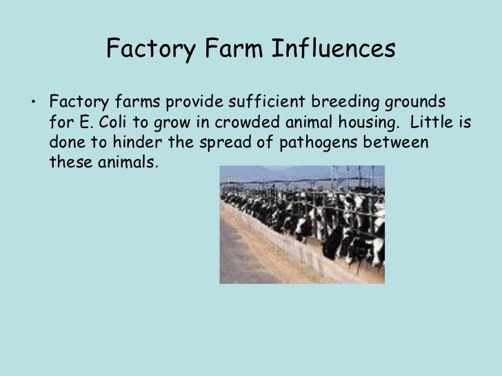 Factory Farm Influences <ul><li>Factory farms provide sufficient breeding grounds for E. Coli to grow in crowded animal ho...
