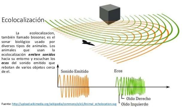 Ecolocalización por Alejandro Salomón Slide 2