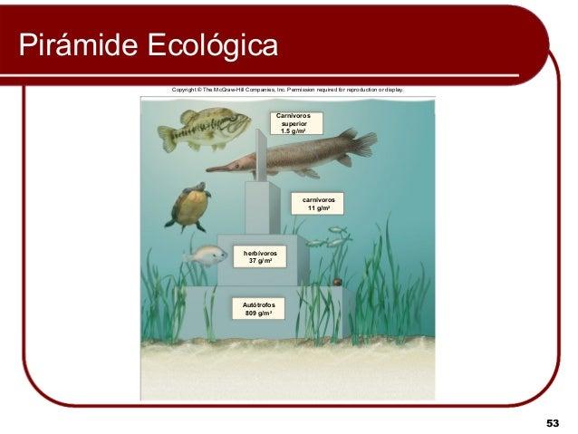 Ecología de comunidades y ecosistemas