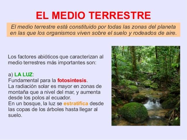4 eso ecologia ForMedio En El Que Habitan Los Arboles