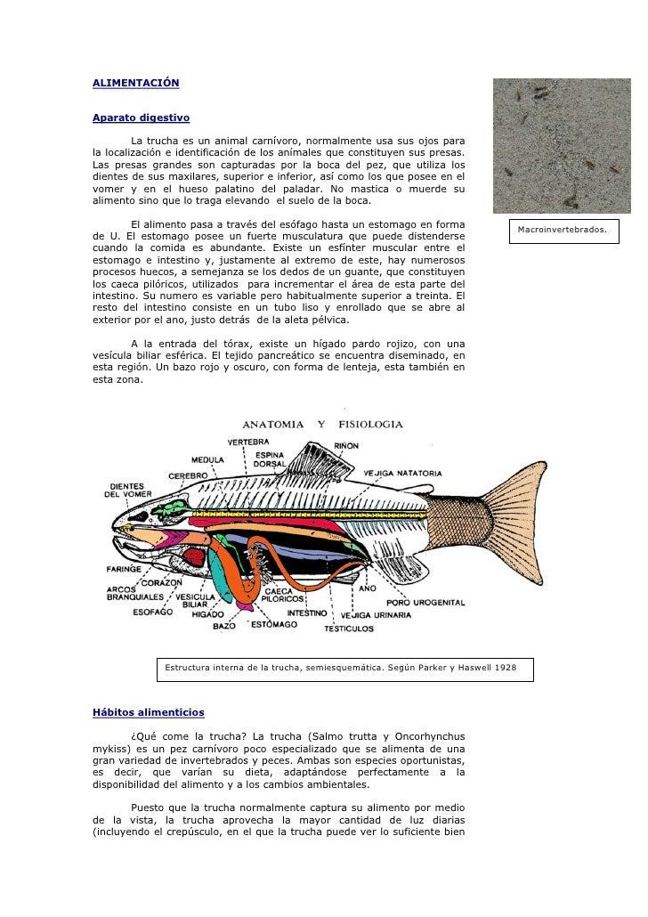 Ecologia de la trucha