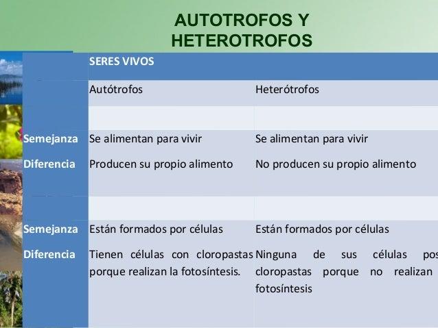 Semejanzas Y Diferencias Entre Nutricion Autotrofa Y Heterotrofa Esta Diferencia