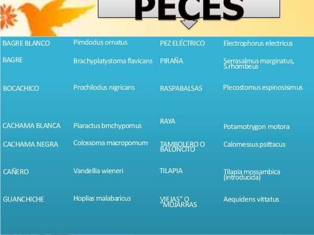 Piso tropical oriental for Pez cachama