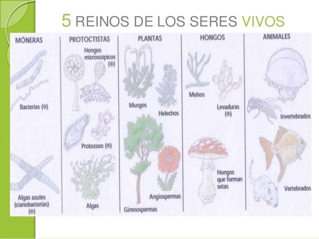 Ecologia y areas protegidas en Bolivia Slide 2