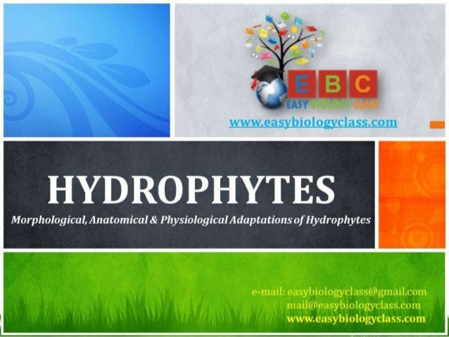 For detailed description of this topic:, Please Click on.. http://www.easybiologyclass.com/characteristics-of-hydrophytes-...