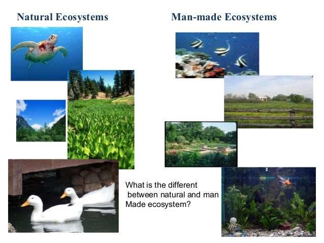 man made ecosystem 1 the man-made ecosystem the ecological approach to product design robin huang nagoya university of arts and sciences, department of design robin@nuasacjp abstract: this thesis proposes a hypothesis by ecological approach to.