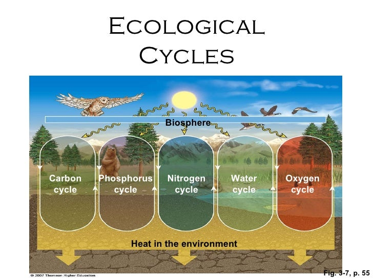 Fig. 3-7, p. 55 Nitrogen cycle Biosphere Heat in the environment Phosphorus cycle Carbon cycle Oxygen cycle Water cycle Ec...