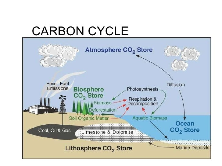 Ecological cycles – Carbon Cycle Worksheet High School