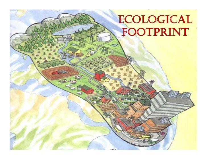 ecological footprinting in an ib school Your ecological footprint essay sample free example of college essay on ecology footprint topics and ideas tips how to write good academic essays and term papers online.