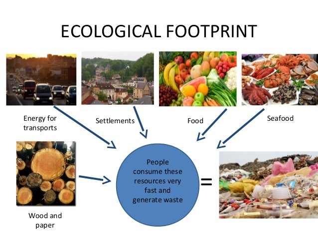 Ecological footprint essay