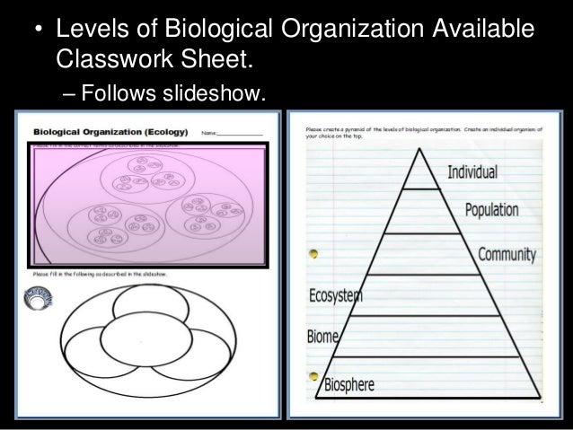 Of ecological organization worksheet levels worksheet