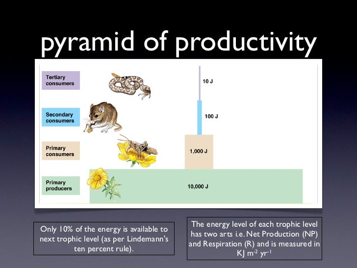 pyramid of productivity                                          The energy level of each trophic levelOnly 10% of the ene...