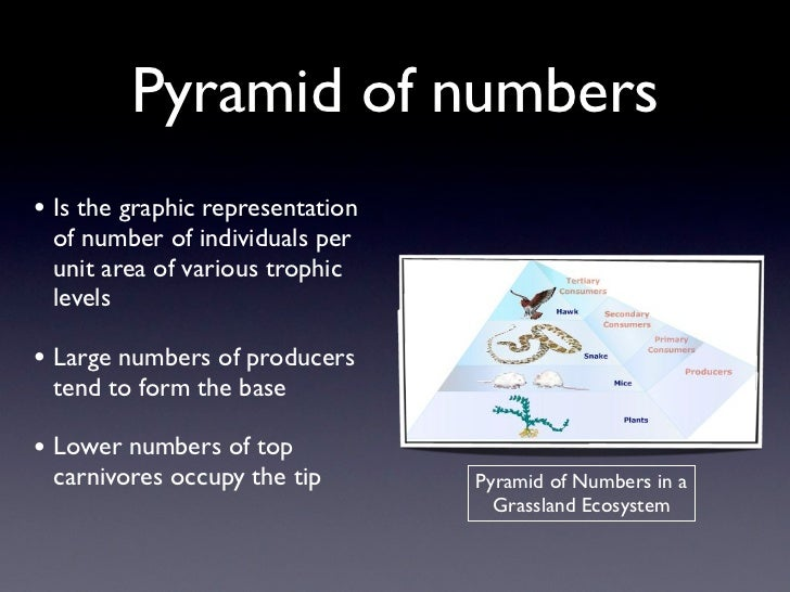 Pyramid of numbers• Is the graphic representation of number of individuals per unit area of various trophic levels• Large ...