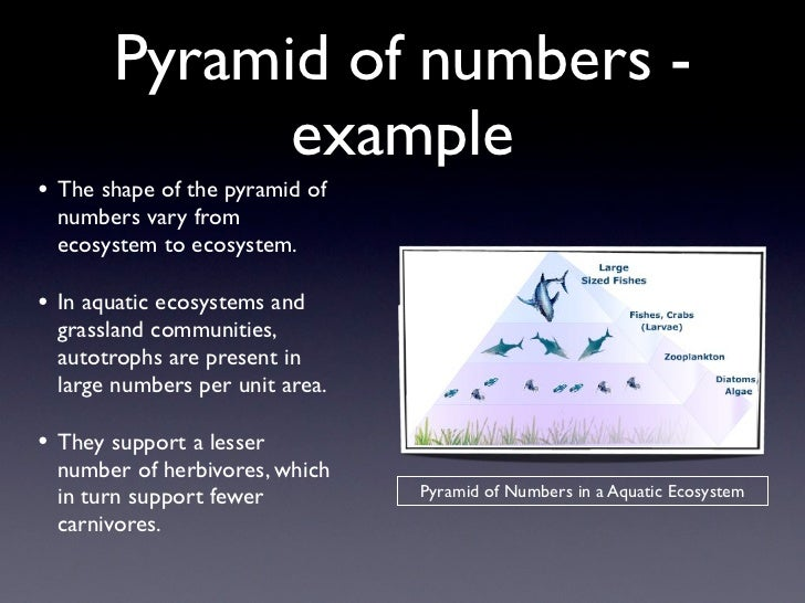 Pyramid of numbers -             example• The shape of the pyramid of numbers vary from ecosystem to ecosystem.• In aquati...