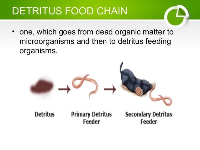 DETRITUS ...