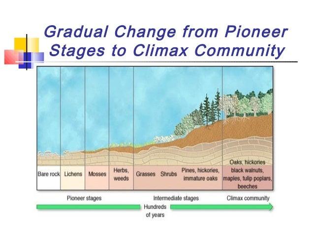 significance of ecological succession