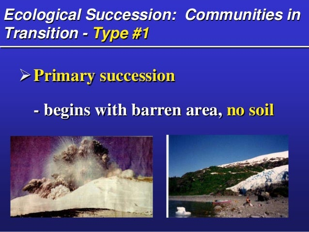 ecological succession begins with a pioneer community One example of primary succession is the pioneer communities that begin to  inhabit a newly created lava bed, where life cannot exist until the.