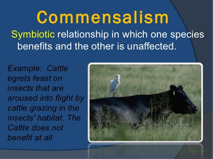 what is an example of a symbiosis relationship