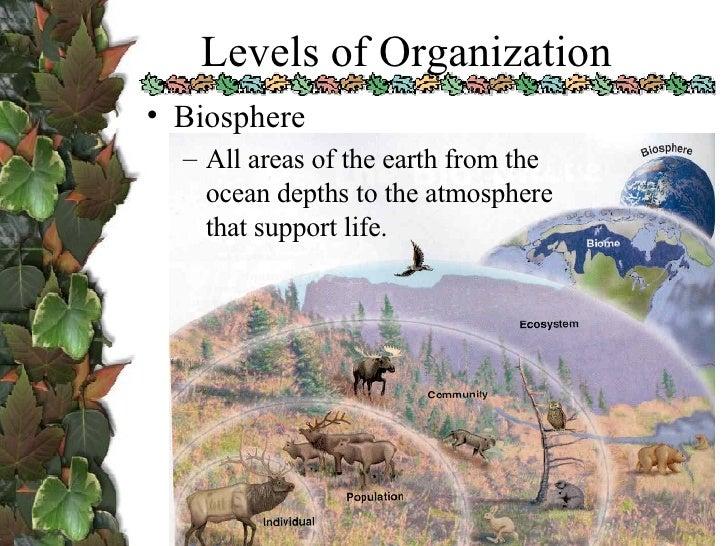 Ecology 1