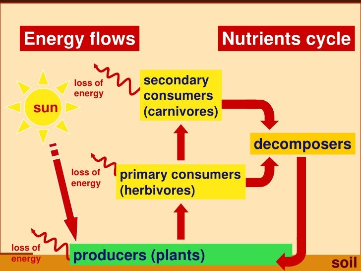 Energy flow and nutrient cycles worksheet answers