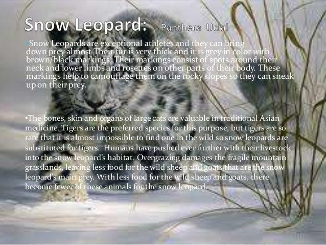 essay on endangered species in pakistan