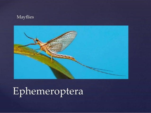 Hexapod Ecology