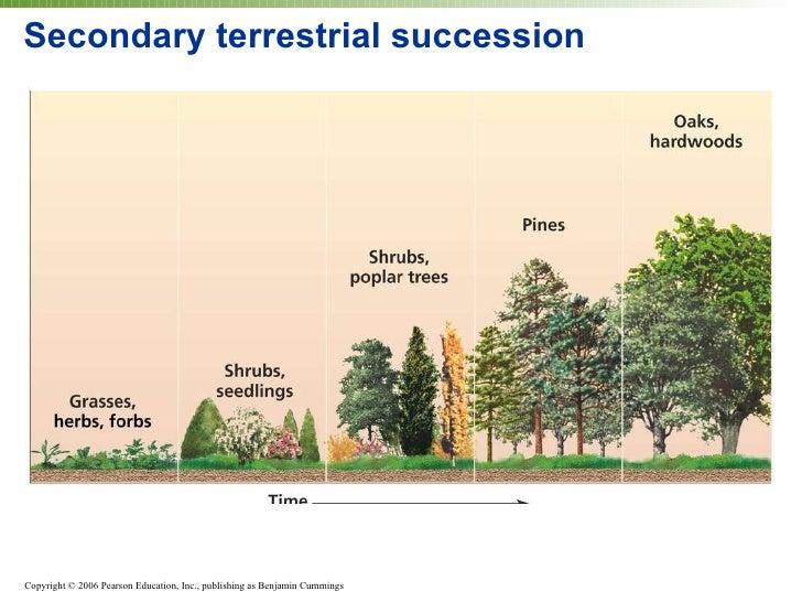 ecology1 39 728 primary succession and secondary succession venn diagram elita
