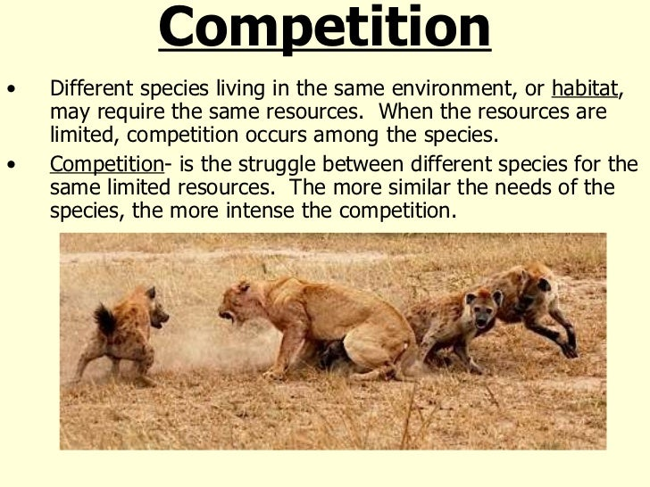 example of competitive relationship in an ecosystem with similar