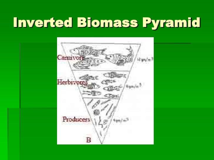 Ecology 3 energy and ecology ecological pyramids