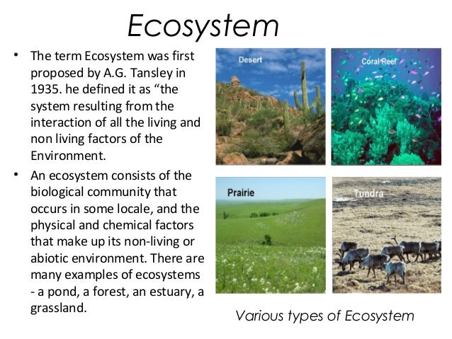 ecosystem essay for kids Hey kids wanna be this months earth hero  share your story about how you are helping planet earth and become the earth hero of the month.