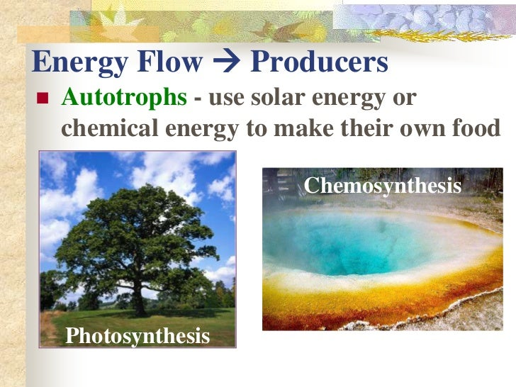 013 - Photosynthesis and Respiration