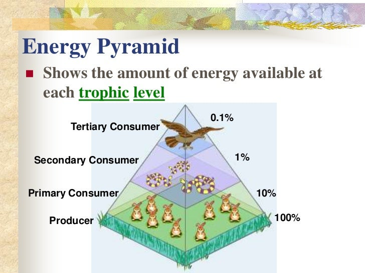 Does Photosynthesis Make Energy Available To Food Chains