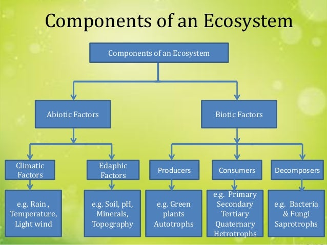 what are the different components of ecosystem