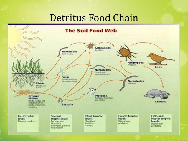 Grazing Food Chain Diagram