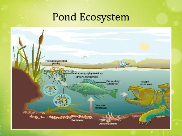 the importance of microscopic organisms in aquatic ecosystems Food chains and webs analyze and interpret data to provide evidence for the effects of resource availability on organisms and populations of organisms in an ecosystem plankton are microscopic plants and animals whose movements are largely dependent upon currents.