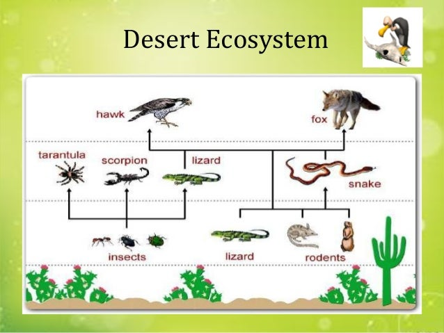 desert ecosystem The mojave desert ecosystem is currently facing several problems, many of which are due to the rapid urbanization of cities, such as los angeles, and other human.