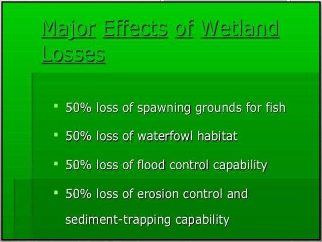 Pakistan wetland program