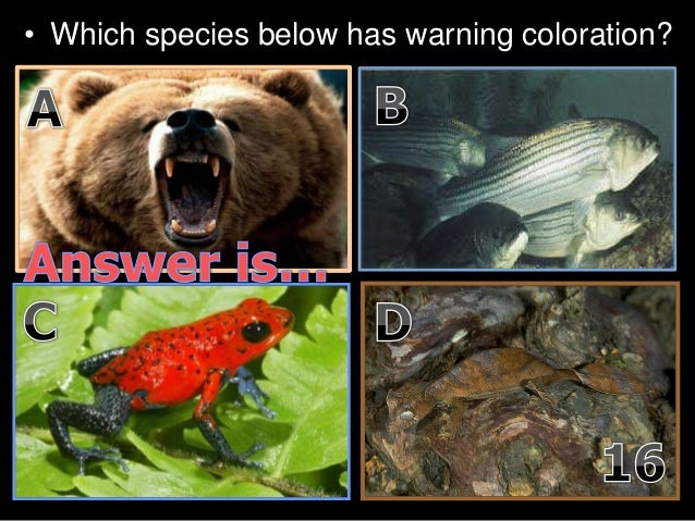 • Which species below has warning coloration?