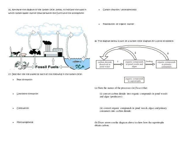 Ib ecology review 41 44 4 i ii ii 16 annotate the diagram of the carbon cycle ccuart Images