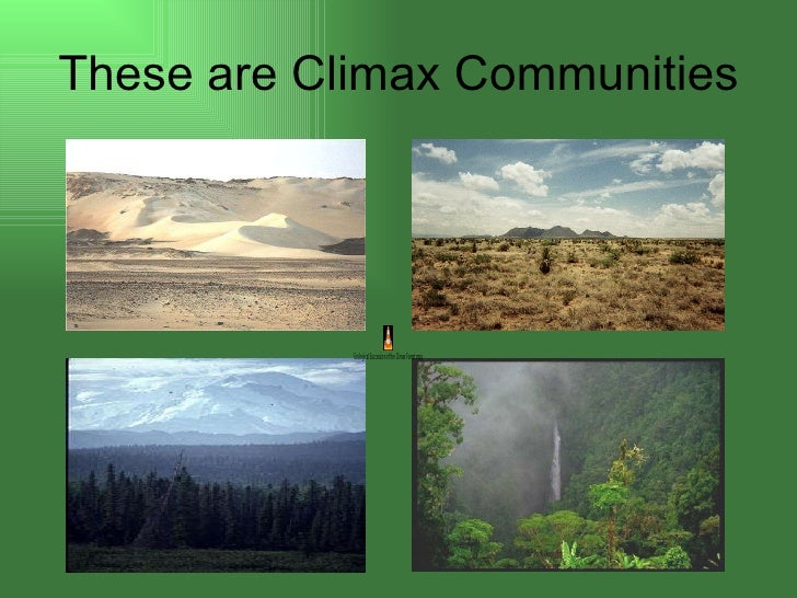Ecological succession 12 these are climax communities publicscrutiny Images
