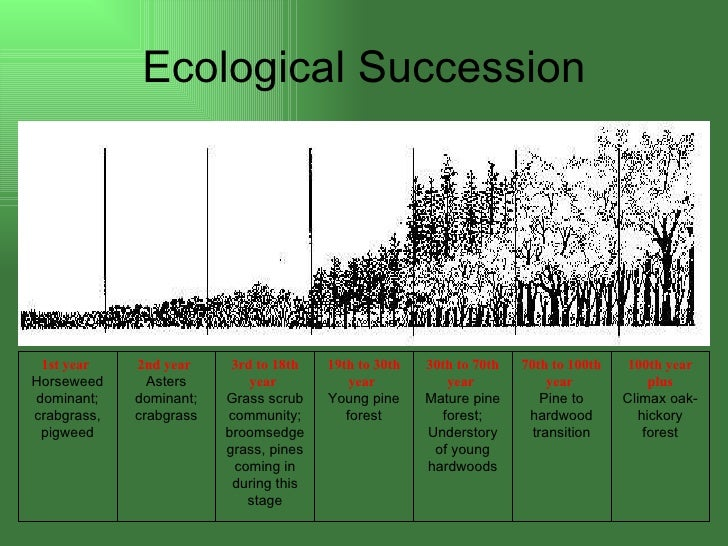 ecosystem succession paper Ecosystem succession and in this paper, we wish to examine one of these hypotheses of succession, the ecosystem will dem.