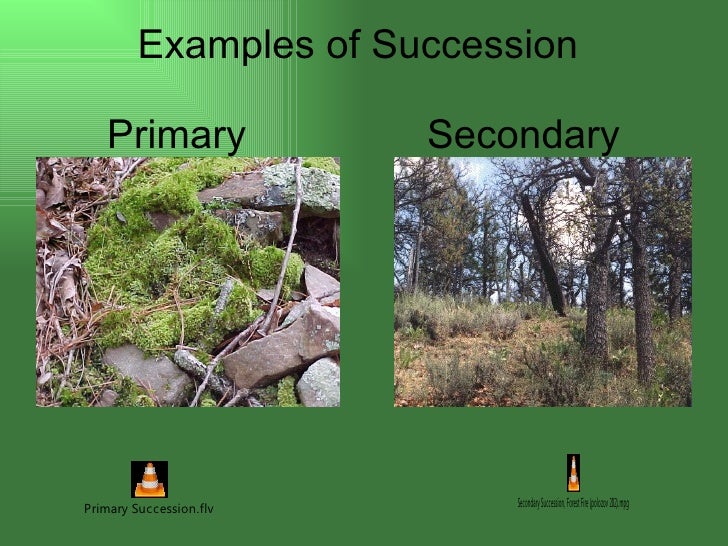 primary and secondary succession essay We hypothesized that we would find evidence to suggest that p macroloba plays a greater role in secondary stands, having a greater effect on nutrient cycle dynamics, as these soils recover from disturbance, as compared to the primary stands, which have already undergone succession, and, consequently, would have greater complexity of vegetation.