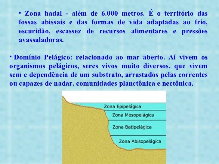 <ul><ul><ul><li>Zona hadal - além de 6.000 metros. É o território das fossas abissais e das formas de vida adaptadas ao fr...