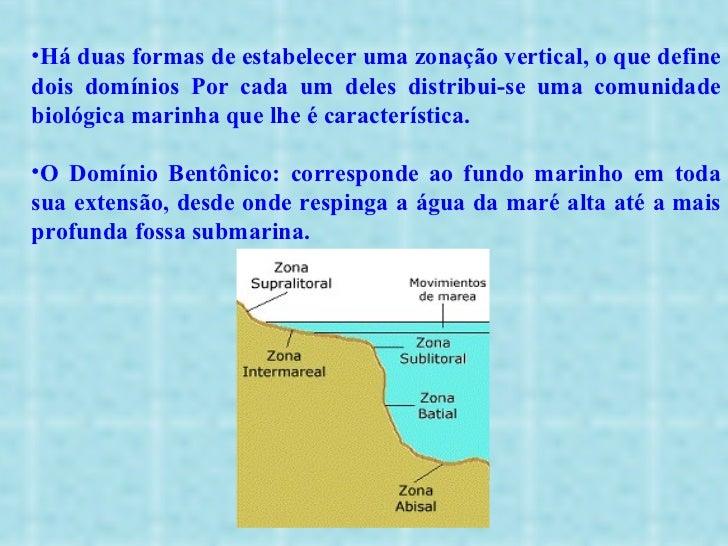 <ul><li>Há duas formas de estabelecer uma zonação vertical, o que define dois domínios Por cada um deles distribui-se uma ...