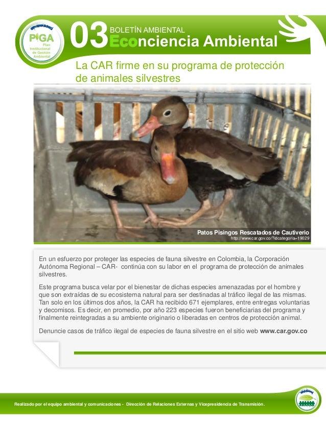 03                             La CAR firme en su programa de protección                             de animales silvestre...